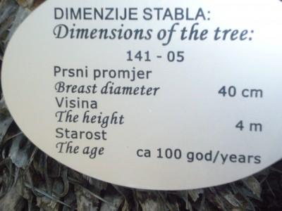 p1040700-Dimenzije-stabla