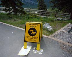 Carnivore alert in Banff