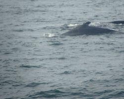 Whales in Stellwegen Bank